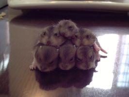 A Pile Of Baby Hamsters by DANamic