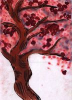 Cherry Blossom tree scetch by Shalada