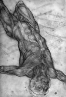 Gericault Muscle overlay by Newbeing