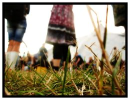 Werchter 08: From the Ground 5 by adamwolf