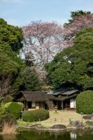 Japan trip picture 29 by Asearti