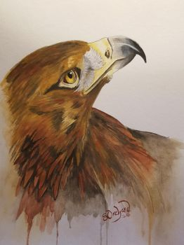 Red Tailed Hawk by barnowlart