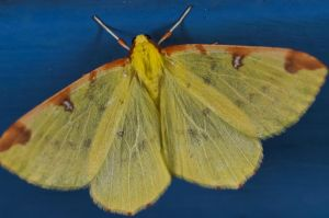 Yellow Butterfly - 2 by sheihulud