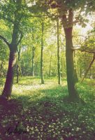 14-06-2012 - forest by Golldfire