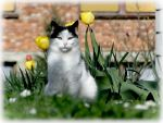 Cat and Tulips by Uran11
