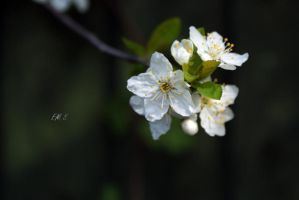 Spring is beautiful 2 by emilythestranger