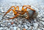 A spiders dying love... by foxstone