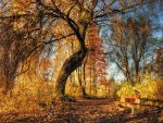 The old willow and the bench by realityDream