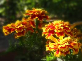 Morning Marigolds by Utukki-Girl
