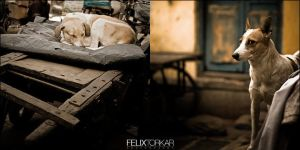 A Dog's Life In Delhi by FelixTo