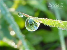 Nature by Lucie-Z-Photographie