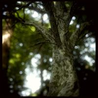 A tree by Dave-DK