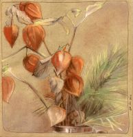 Physalis flowers and pine twig by NatashaSolo