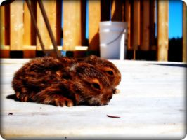 Two baby hares by La-Suzanna