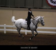Gray Canter (4) by chantriera