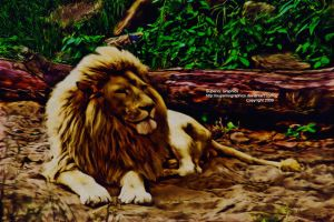 King Of The Jungle by SuperiorGraphics