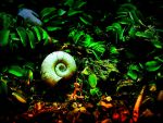 Snail by sican