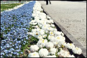 blue white flowers. by Monstacookie