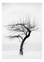 Lonely Tree by Arcanacaries