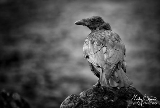 Nevermore by MikeFShaw