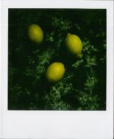 citrons. by moumine-polaroid