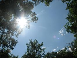 Stock: Trees/Sky/Sun by Think-Outside-Of-Box
