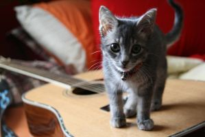 Kittens Like the Blues by another-dead-hero420