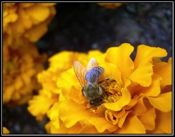 F... another bee by Macomona