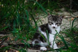 Cats all around XXII by SilvieTepes