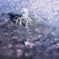 Moon Spider by Neighya
