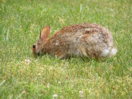 Rabbit 05 by DKD-Stock