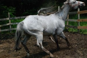 Appaloosa 55 by Spotstock