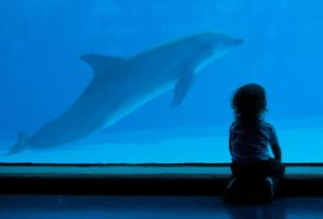 Child and dolphin by EyeOfBoa