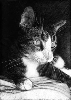 Tabby B And W by SRussellart