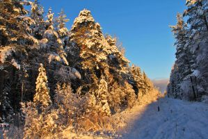 Winter forest by Nietra