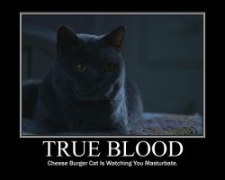 True Blood Cat by Johnny-Uritsu