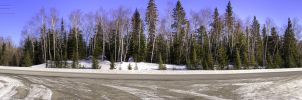 Panoramic trees HDR by digswolf