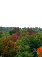 Assortment of Trees by b-a88