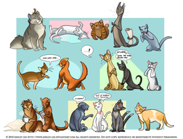 Cats by GreekCeltic