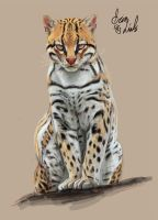 Cat (First Time Paint Animal) by revelinart