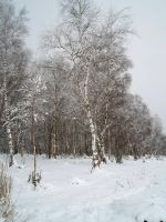 Winter forest 616 by MASYON