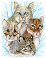 Unknown Wildcats by Syphellium