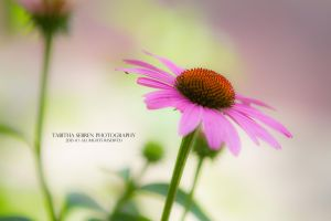 My Favorite Flower by TabithaS-Photography