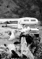 Gulls Camping by BuuckPhotography