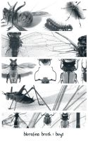 bluretina brush:bugs by bluretina-stock