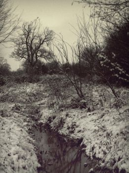 Wintery 2 by pete-c-89