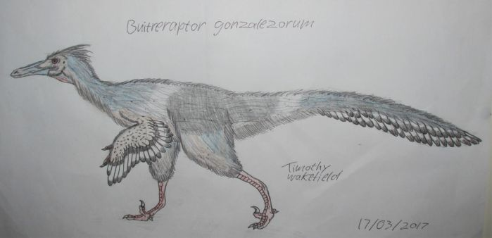 Buitreraptor gonzalezorum by Tim64