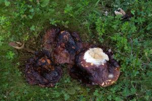 Shroom Decay 2013-08-27 02 by skydancer-stock