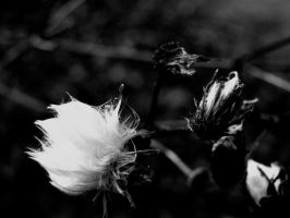 high contrast plant by eseagull