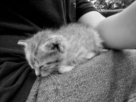 Sleepy Kitten by adhpv